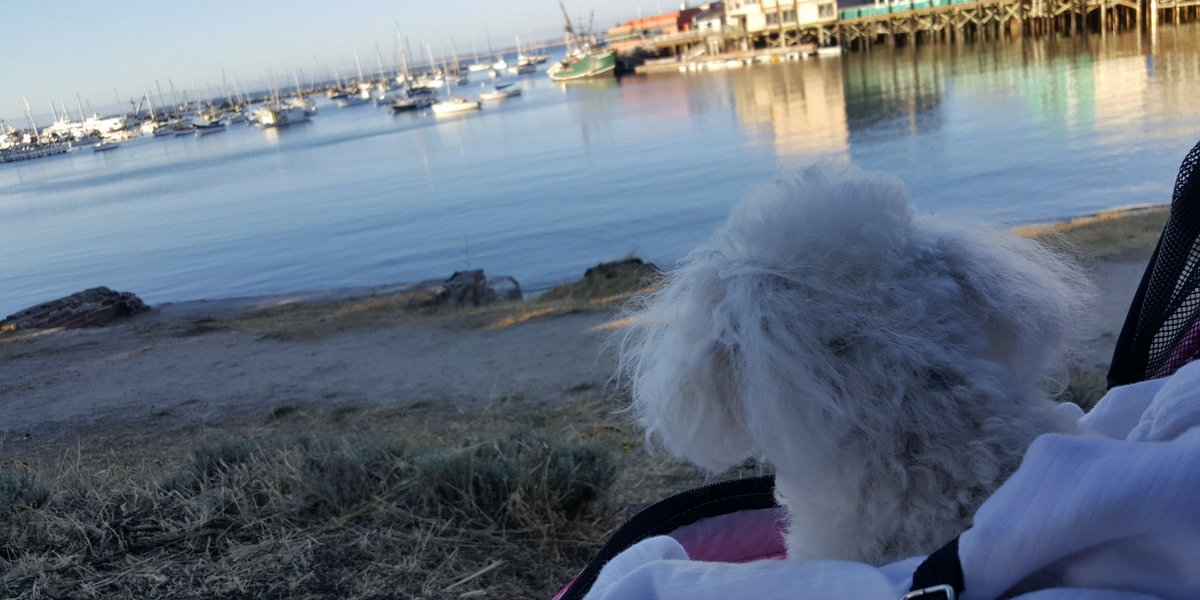 DGinPG In Home Pet Sitters - Ocean Walk Monterey Bay